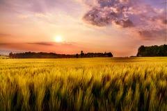 Schöner roter Sonnenaufgang über Feldern und Wäldern Stockbilder