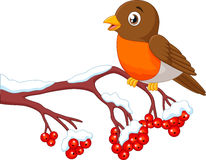 Schöner Rotkehlchenvogel der Karikatur, der auf dem Beerenbaum aufwirft Lizenzfreies Stockbild