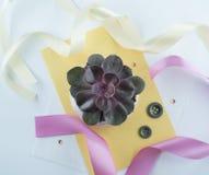 Schöner saftiger Kaktus auf Papieren Stockfoto