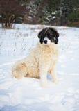 Schöner Schäferhund-Hund Stockbilder