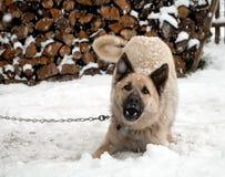 Schöner Schäferhund-Hund Lizenzfreies Stockbild