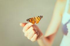 Schöner Schmetterling Lizenzfreie Stockfotografie