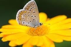 Schöner Schmetterling stockfoto