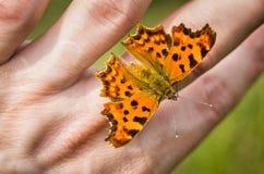Schöner Schmetterling Stockbilder