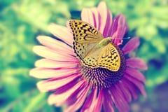 Schöner Schmetterling auf einem rosa Blumengänseblümchen Seashells gestalten auf Sandhintergrund Stockfotos