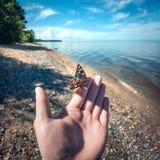 Schöner Schmetterling, der auf der Mannhandnahaufnahme sitzt stockfoto