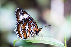 Schöner Schmetterling im Garten stockfotos