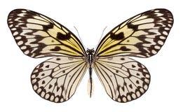 Schöner Schmetterling lokalisiert auf Weiß Lizenzfreies Stockbild