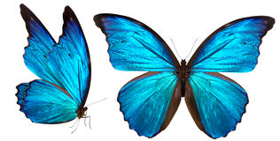 Schöner Schmetterling lokalisiert auf Weiß stockfoto