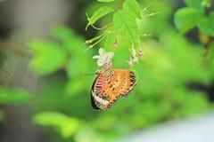 Schöner Schmetterling und reizende Blume auf Hintergrund des natürlichen Lichtes Lizenzfreies Stockfoto