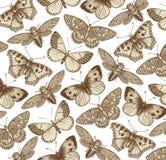 Schöner Schmetterling, Zikade und Insekt Antike Tierillustrationen fauna Zeichnungsstich Bunte Auslegung des Strudels Weinlese-Ve Lizenzfreies Stockbild