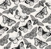 Schöner Schmetterling, Zikade und Insekt Antike Tierillustrationen fauna Zeichnungsstich Bunte Auslegung des Strudels Weinlese-Ve Lizenzfreies Stockfoto