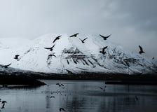 Schöner schneebedeckter Berg mit See- und Fliegenvögeln stockfotos