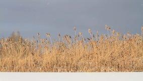 Schöner schneebedeckter Tag über dem See stock footage