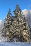 Schöner schneebedeckter Waldkältewinter Lizenzfreies Stockfoto