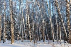 Schöner schneebedeckter Waldkältewinter Stockbilder