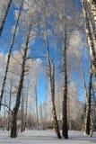 Schöner schneebedeckter Waldkältewinter Stockbild