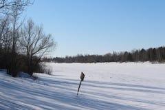 Schöner schneebedeckter Waldkältewinter Stockfotografie