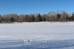 Schöner schneebedeckter Waldkältewinter Stockfoto