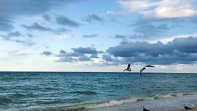 Schöner Schuss von den Vögeln, die durch Ozean fliegen stock video footage