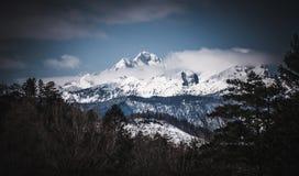 Schöner Schuss von Forest Hills während des Winters stockbilder