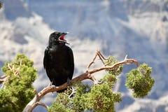 Schöner schwarzer Vogel Lizenzfreie Stockbilder