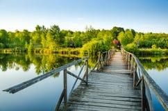 Schöner See im Sommer Stockfoto