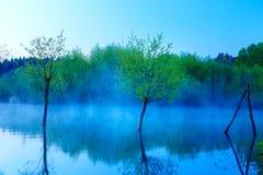 Schöner Seeblick im Morgennebel mit mystischen Bäumen als Resten einer Mole in den blauen Tönen Stockbilder