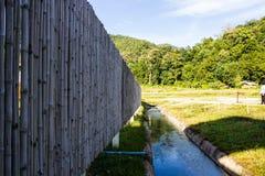 Schöner siamesischer Bambushintergrund Stockfotografie