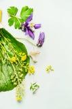 Schöner Sommergarten blüht mit Blättern und dem Blumenblatt auf hellem Hintergrund, Draufsicht Lizenzfreies Stockfoto