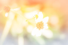 Schöner Sommerhintergrund Stockfotografie