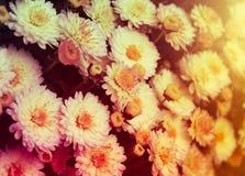 Schöner Sommerhintergrund mit wenigen roten und rosa Blumen, wa lizenzfreie stockfotografie