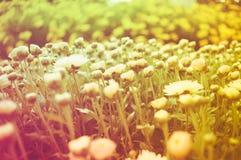 Schöner Sommerhintergrund mit wenigen roten und rosa Blumen, wa lizenzfreies stockfoto
