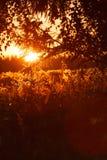 Schöner Sommersonnenuntergang Stockbild