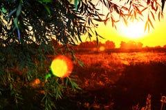 Schöner Sonnenaufgang über einem Feld gesehen von hinten einen Baum Lizenzfreies Stockbild