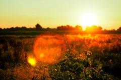 Schöner Sonnenaufgang über einem grünen Feld Stockbilder