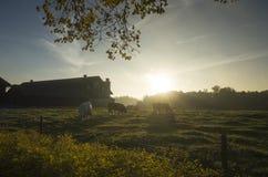 Schöner Sonnenaufgang am Herbstmorgen in Schweden Skandinavien lizenzfreies stockbild