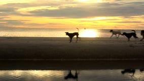 Schöner Sonnenaufgang am Strand stock video footage