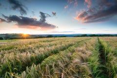 Schöner Sonnenuntergang über Ackerland Lizenzfreies Stockbild