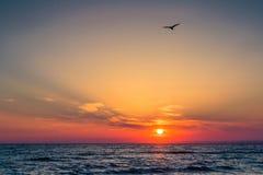 Schöner Sonnenuntergang über dem Schwarzen Meer im Sommer Der Vogel, der über Wasser fliegt Eine Seebucht mit malerischen Bergen Stockfoto
