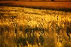 Schöner Sonnenuntergang über Feld Stockbilder