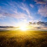 Schöner Sonnenuntergang über Herbstfeld Lizenzfreies Stockfoto
