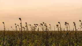 Schöner Sonnenuntergang auf dem Gebiet Lizenzfreie Stockfotos