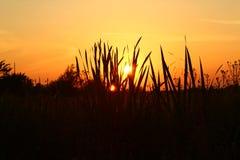 Schöner Sonnenuntergang auf dem Gebiet Stockfotos