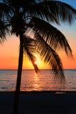 Schöner Sonnenuntergang auf dem Strand, Sonne geht unten zum Meer Palme auf dem bayshore Ruhe umgebend, Erholungskonzept betäuben lizenzfreie stockfotos