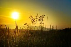 Schöner Sonnenuntergang auf der Wiese Lizenzfreie Stockfotografie