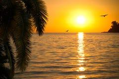 Schöner Sonnenuntergang auf Küste mit Palmenzweigen Stockfotografie