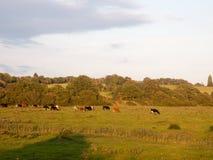 Schöner Sonnenuntergang beleuchtete grüne Landlandszene mit Bäumen und Esprit Stockfotografie
