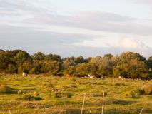 Schöner Sonnenuntergang beleuchtete grüne Landlandszene mit Bäumen und Esprit Stockfoto