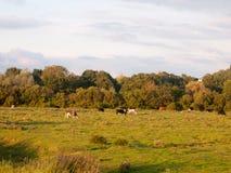 Schöner Sonnenuntergang beleuchtete grüne Landlandszene mit Bäumen und Esprit Lizenzfreies Stockfoto